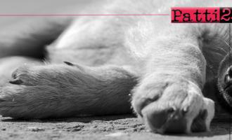 """BARCELLONA P.G. – Uccisione del cane Ludy. Ilenia Torre: """"Totale indignazione per gesto crudele, vigliacco e criminale!"""""""