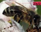 """PATTI – """"Erasmus plus"""". L'I.C. Lombardo Radice a Valencia  presenterà un lavoro sull'ape nera sicula."""