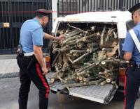 MESSINA – Rubavano legna in area boschiva. Arrestati padre e figlio.