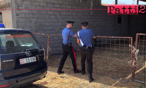 CESARO' – Sospesa attività azienda zootecnica per illeciti. Sanzioni per oltre 30 mila euro.