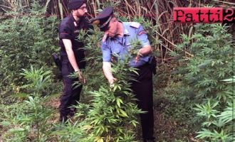 MESSINA – Coltivazione e detenzione illecita di sostanze stupefacenti e detenzione di armi clandestine. Arrestato 31enne