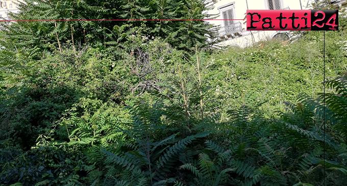 PATTI – Giungla, Foresta Amazzonica o … via Garibaldi in un habitat naturale per randagi, topi e insetti di ogni tipo.