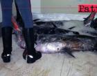 BARCELLONA P.G. – Sequestrati 950 Kg di pesce in cattivo stato di conservazione A Barcellona P.G. e Milazzo