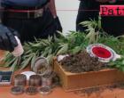BROLO – Coltivava in casa della marijuana. Arrestato 38enne