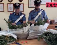 CESARO' – Oltre 10 Kg di marijuana in un casolare. 3 arresti.