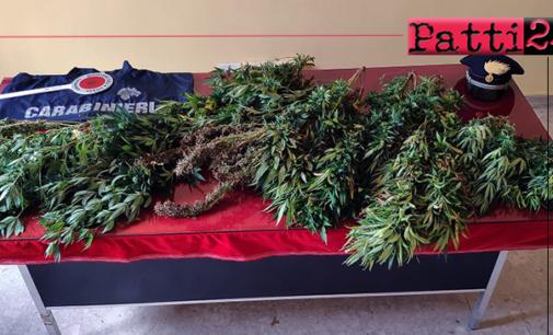 MOTTA D'AFFERMO – Coltivava marijuana in una piccola serra artigianale. Arrestato 45enne