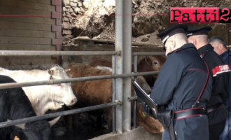 CAPIZZI – Violazioni amministrative tracciabilità carni. Sotto sequestro  164 kg di salumi, sanzioni per 11.500,00 Euro.
