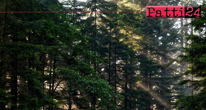 PATTI – L'IIS Borghese Faranda aderisce alla Festa nazionale degli alberi.