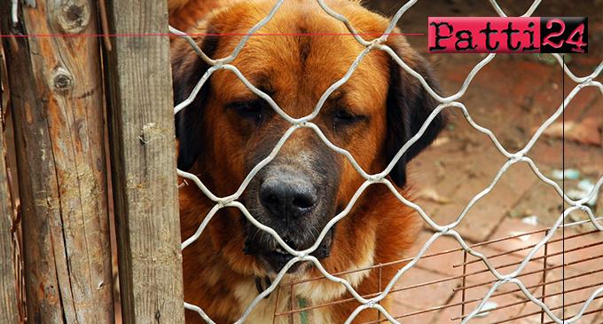 PATTI – Partecipare a un bando per la messa a norma del rifugio per cani randagi di contrada Mulinello.