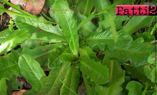 """MESSINA – """"Minessra sabbaggia"""". Corso formativo per la conoscenza, la raccolta e l'utilizzo delle piante alimurgiche."""