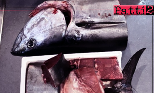 MESSINA – Sequestrati 30 Kg di Tonno Rosso privo di tracciabilità. 2.600,00 euro di multa.