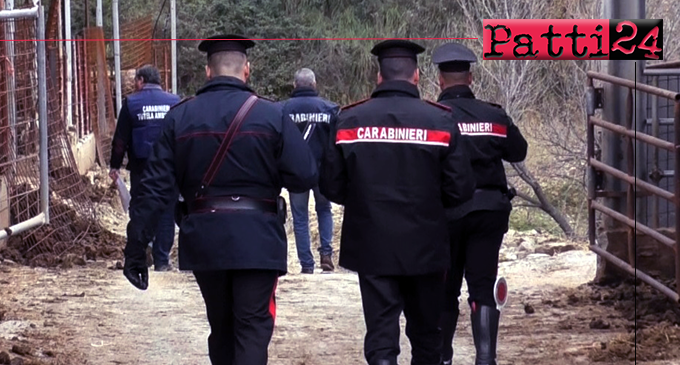CESARO' – Denunciati i titolari di 2 aziende zootecniche e sequestrati 48 capi di bestiame.