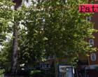 MILAZZO – Democrazia partecipata, i cittadini scelgono  la riqualificazione di piazza Nastasi e piazza San Papino