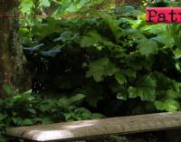 PATTI – Aree a verde pubblico. Affidati i lavori di manutenzione per 45.750 euro
