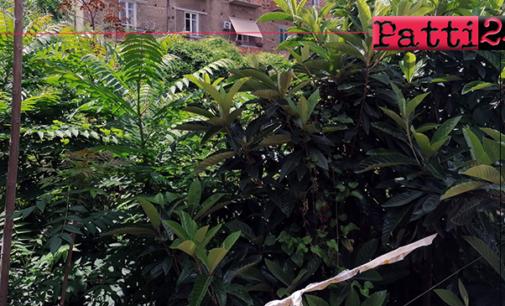 """PATTI – In centro, ampio spazio a verde per set cinematografico serie """"Io Tarzan tu Jane"""""""