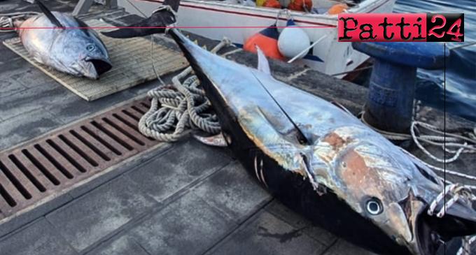 MILAZZO – Pesca illegale. Sequestrati due esemplari di tonno rosso e verbalizzato diportista.