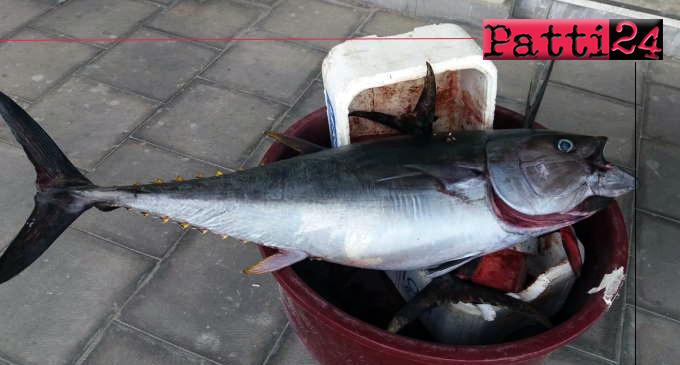 MESSINA – Sequestrati in una pescheria 67 kg di tonno rosso privo di documenti di tracciabilità.