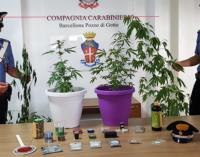 BARCELLONA P.G. – Coltiva e detiene sostanze stupefacenti in casa. Arrestato 57enne