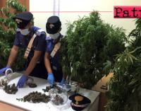 CAPO D'ORLANDO – Coltiva piante di cannabis sul terrazzo di casa. Arrestato 45enne, denunciata la moglie.