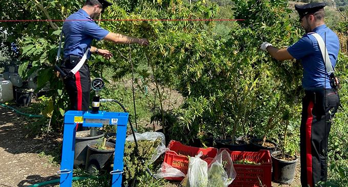 TAORMINA – Coltivano piante di Cannabis. Arrestati padre e figlio.