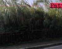 PATTI – Terreni incolti adiacenti la via Monsignor Angelo Ficarra. Ordinanza  pulizia e discerbamento