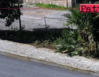 """PATTI – Si sta provvedendo alla pulizia di marciapiedi e piccole aree """"preda"""" di erbacce."""