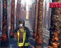 TORREGROTTA – Piante in fiamme in un vivaio. Il rogo ha coinvolto un'area di circa 1000 mq con 1000 palme.