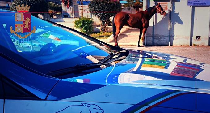 MESSINA – Corse clandestine di cavalli. Denunciati gli organizzatori e sottoposti a sequestro cavalli e calessi.