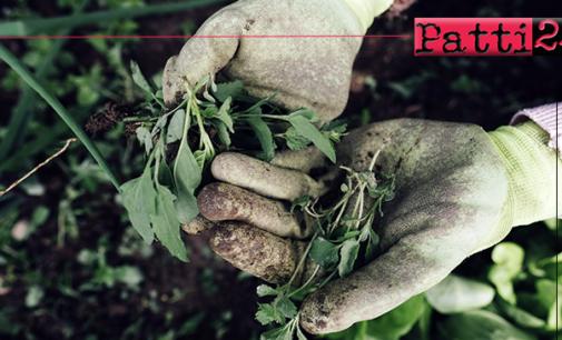 MILAZZO – Anche l'ultimo giardiniere  è ormai prossimo alla pensione, Comune alla ricerca di giardinieri.