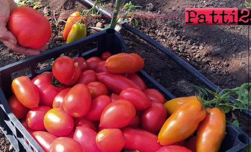PATTI – Gli allievi dell'Istituto Tecnico Agrario donano i prodotti della terra a chi ha bisogno.