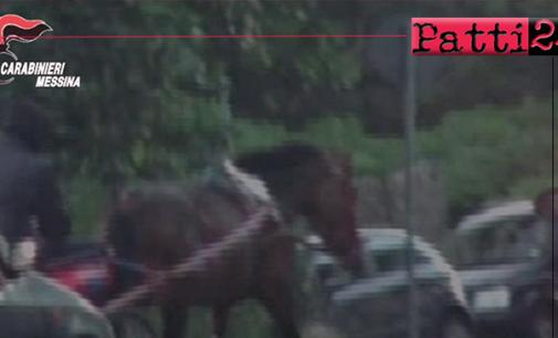 MESSINA – Corse clandestine di cavalli sul viale Giostra. Tre denunciati