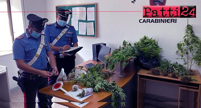 NASO – Coltivava piante di cannabis indica tra alcuni filari di pomodori. 47enne fermato sul lungomare di Capo d'Orlando.