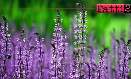 SAN PIERO PATTI – Piante e fiori nelle aiuole e nelle fioriere del centro cittadino