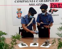 SANTA LUCIA DEL MELA – 47enne coltiva piante di cannabis. Arresti domiciliari e divieto di dimora in provincia.