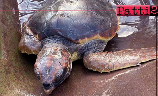 PATTI – Amore per il mare. Due ragazzi salvano una tartaruga marina